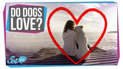 S2018E35 - Does Your Dog Love You?